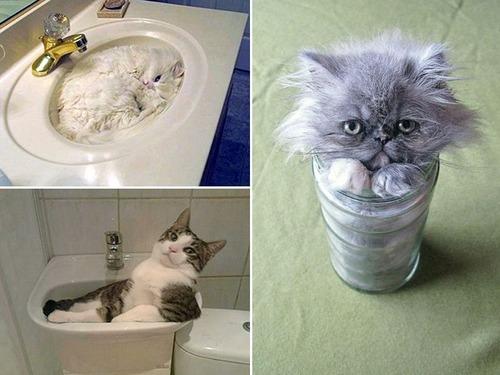 器に入った猫の画像(8枚目)