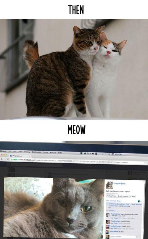 テクノロジーの進化がネコ達に与えた影響の比較画像の数々!!の画像(7枚目)