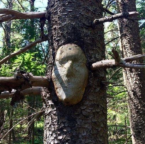 不気味な形の樹木の画像(7枚目)
