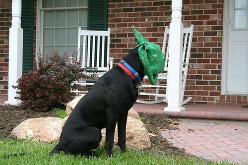 犬はバカ可愛い!!バカだけど憎めない可愛い犬の画像の数々!!の画像(17枚目)