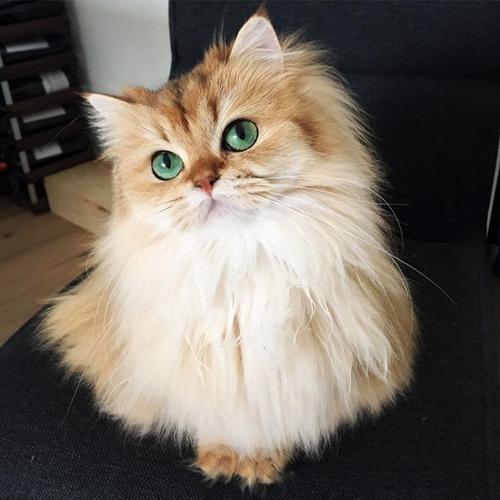 かわい過ぎる猫ちゃんの画像(6枚目)