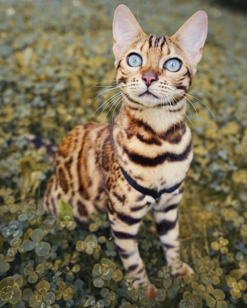 美しい風景と猫の画像(6枚目)