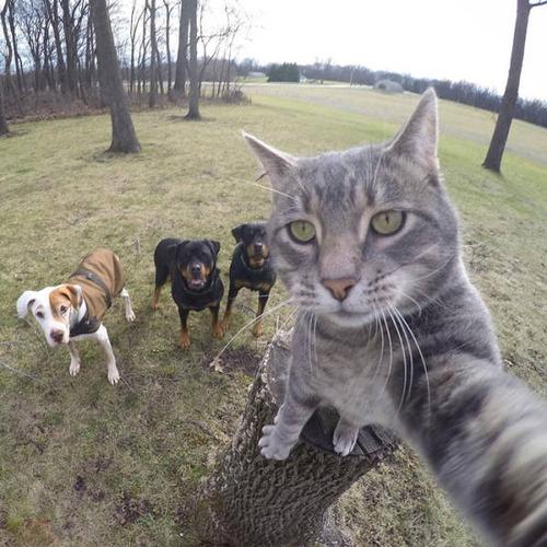 動物達の集合写真の画像(9枚目)