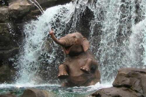 幸せそうな表情の動物達の画像(8枚目)