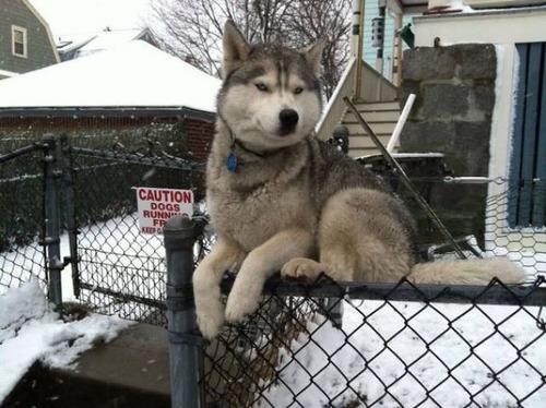 猫と勘違いをしている犬の画像(5枚目)