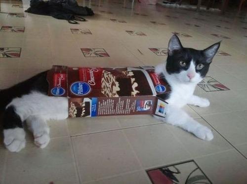 なぜ猫は狭いところが好きなのか??挟まっている猫の画像の数々wwwの画像(5枚目)