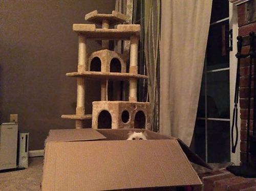 にゃんとも言えない、ちょっと困った猫の画像の数々!!の画像(11枚目)