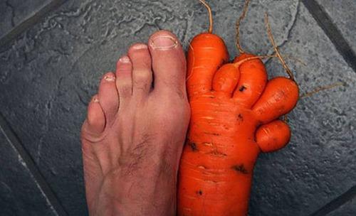 人や動物に見える野菜や果物の画像(22枚目)