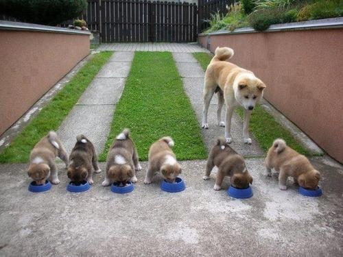 かわい過ぎる子犬の画像の数々!の画像(86枚目)