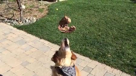 食物をなげて口でキャッチできない犬がひたすら悲しい1