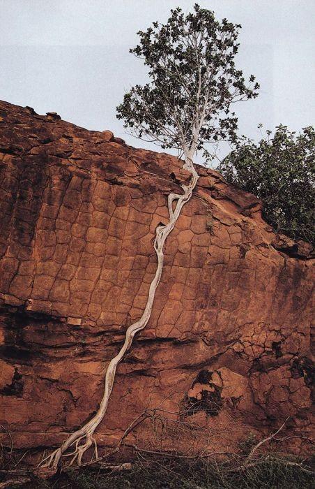 生えている樹木の画像(26枚目)