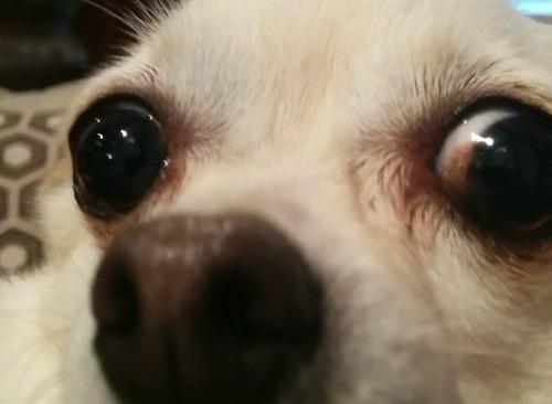 【画像】自分のペットのベストショット写真の数々!!の画像(39枚目)