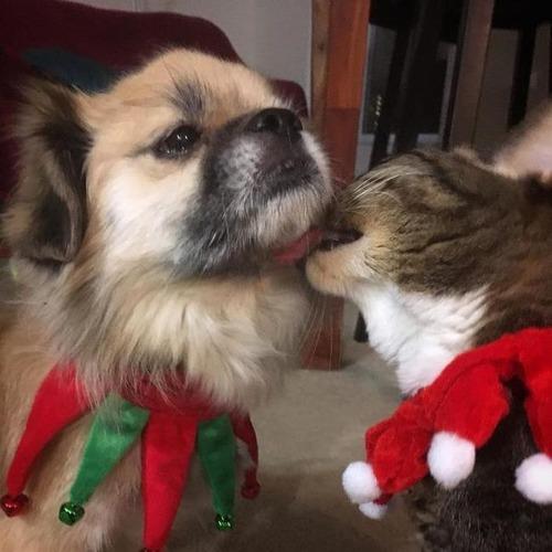 クリスマスのコスプレをした動物達の画像(34枚目)