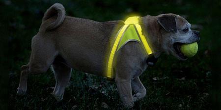 暗い夜でもよく光る!光る犬用のベストがカッコいい!!の画像(1枚目)