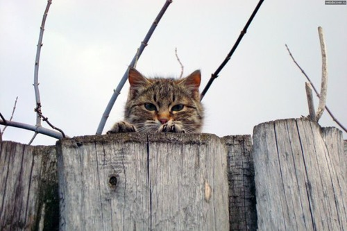 獲物を狙うかわいいネコの画像(13枚目)