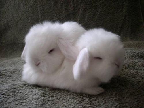 可愛く眠っている動物達の画像(13枚目)