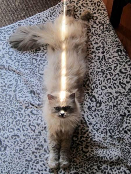 神々しい猫の画像(23枚目)