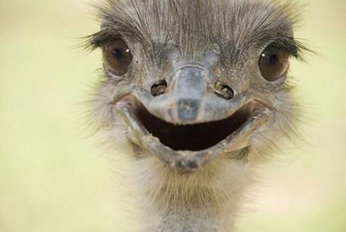 幸せそうな表情の動物達の画像(15枚目)