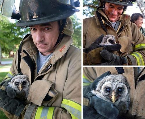 【画像】動物達も本気で助ける!ちょっと癒されるレスキュー隊の仕事の様子!!の画像(1枚目)
