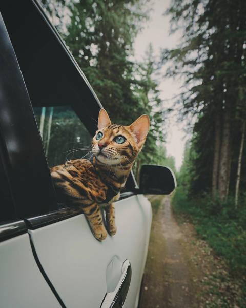 美しい風景と猫の画像(22枚目)