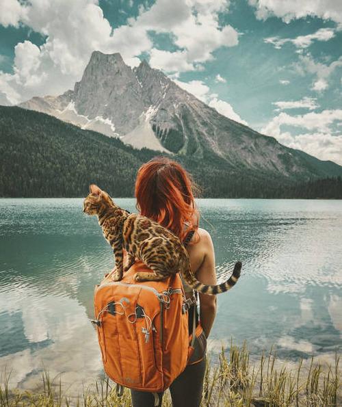 美しい風景と猫の画像(11枚目)