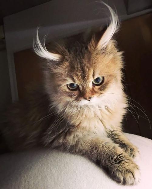 かわい過ぎる猫ちゃんの画像(20枚目)