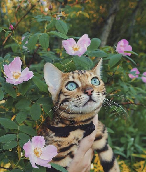 美しい風景と猫の画像(27枚目)
