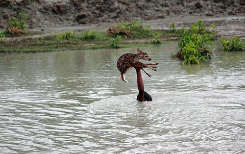 濁流に捲込まれた子鹿の助け方がワイルドすぎる少年!の画像(5枚目)