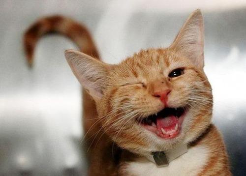 幸せそうな表情の動物達の画像(30枚目)