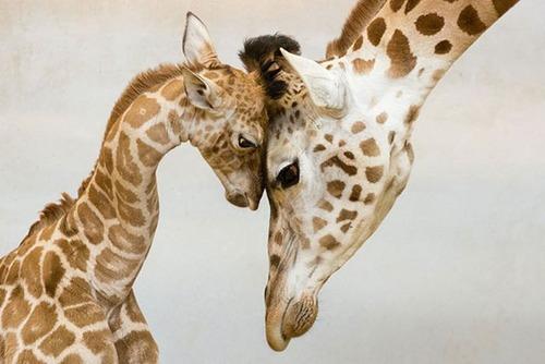 色々な動物の親子の癒される画像の数々!!の画像(23枚目)
