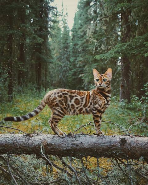 美しい風景と猫の画像(21枚目)