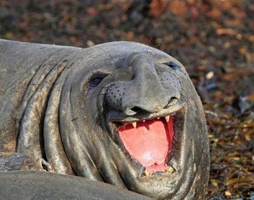 幸せそうな表情の動物達の画像(9枚目)