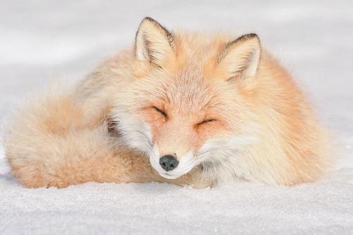 ほのぼのする野生の動物たちの画像の数々!の画像(13枚目)