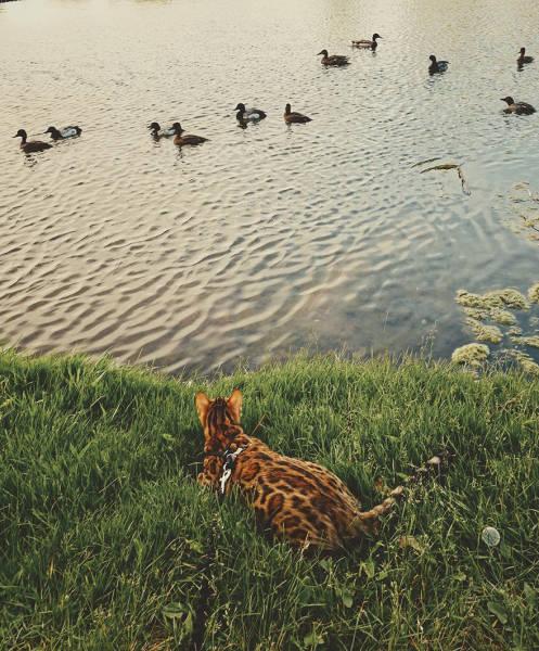 美しい風景と猫の画像(32枚目)