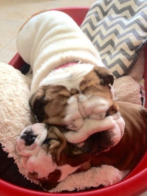 かわい過ぎる子犬の画像の数々!の画像(80枚目)