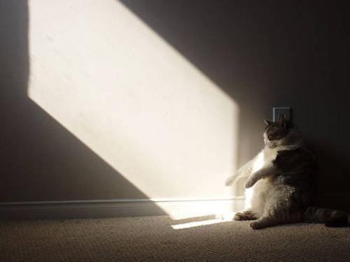 神々しい猫の画像(41枚目)