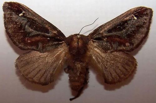 怪しすぎる見た目の昆虫の画像(16枚目)