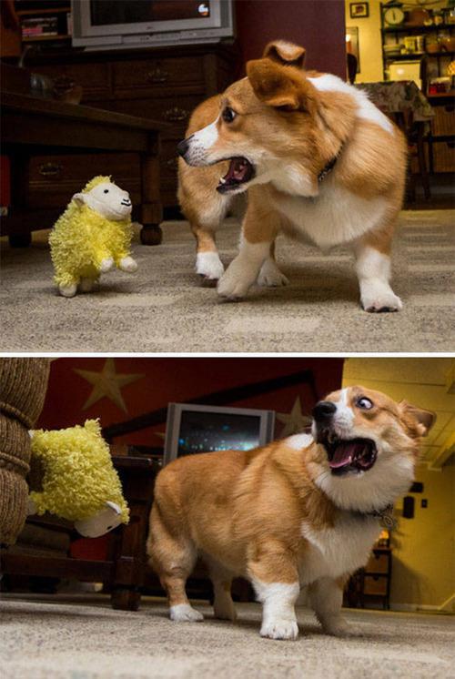 怯えてる犬の画像(8枚目)