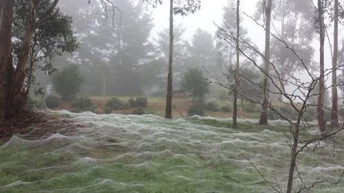 蜘蛛の巣が一面を覆う草原の画像(6枚目)