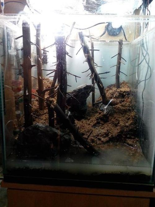 落ちている木で作った水中の森のようなアクアリウムが凄い!!の画像(4枚目)