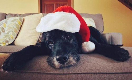 クリスマスのコスプレをした動物達の画像(24枚目)