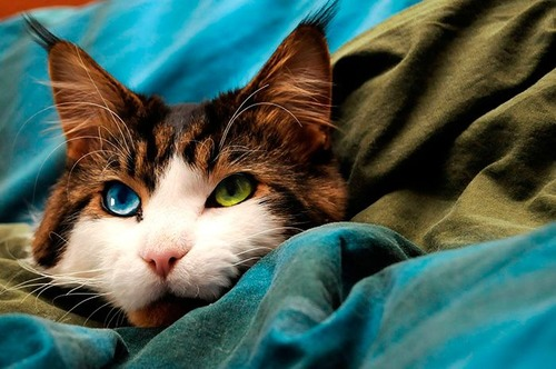 かわい過ぎる猫ちゃんの画像(24枚目)