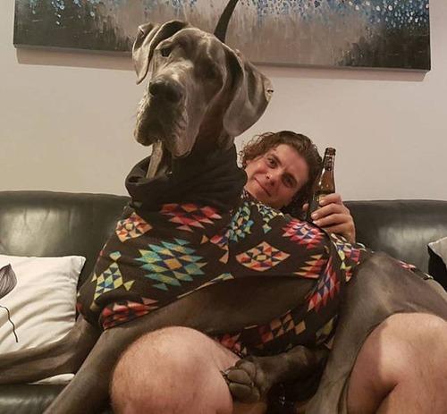 巨大な犬の画像(1枚目)