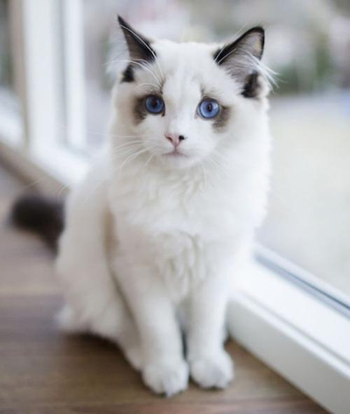 かわい過ぎる猫ちゃんの画像(10枚目)