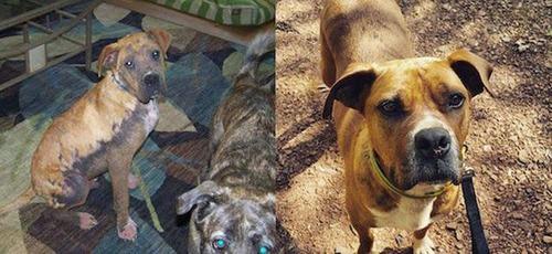 捨犬の時と良い飼主が見つかった時のワンちゃんのほのぼの比較画像の数々!!の画像(15枚目)