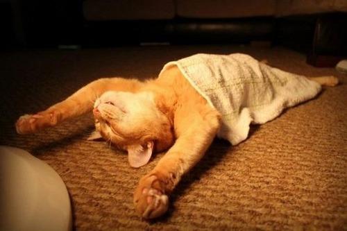 可愛く眠っている動物達の画像(19枚目)