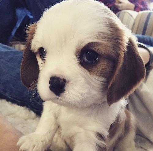 かわい過ぎる子犬の画像の数々!の画像(70枚目)