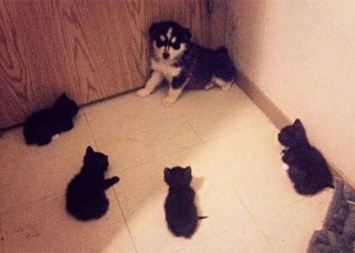 猫と犬の力関係の画像(12枚目)