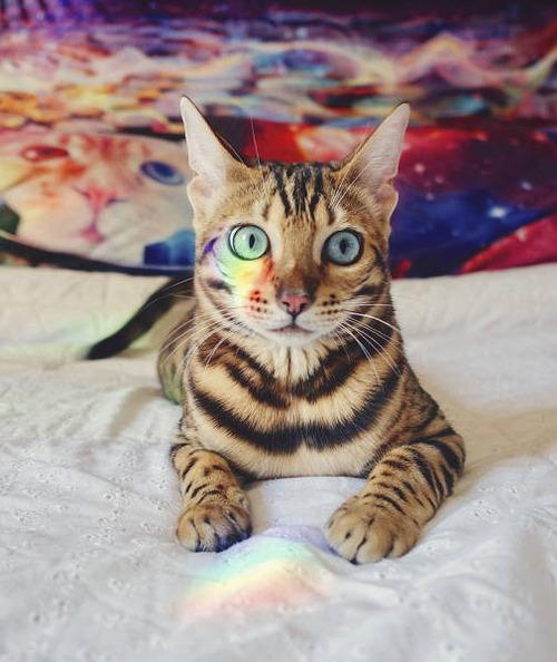 美しい風景と猫の画像(4枚目)