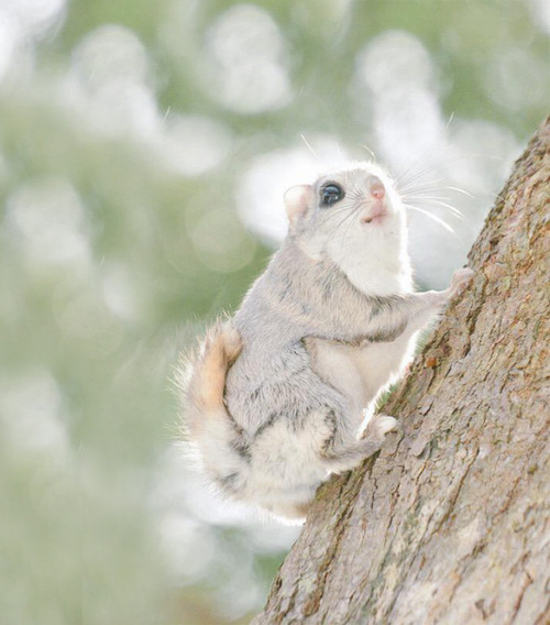 ほのぼのする野生の動物たちの画像の数々!の画像(5枚目)